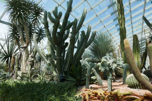 gardens cactus
