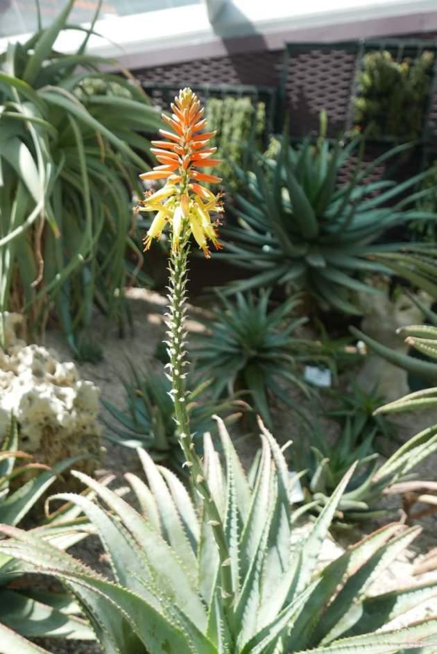 gardens flower