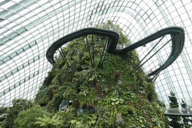 gardens forest walkway