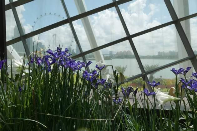 gardens lilys panorama