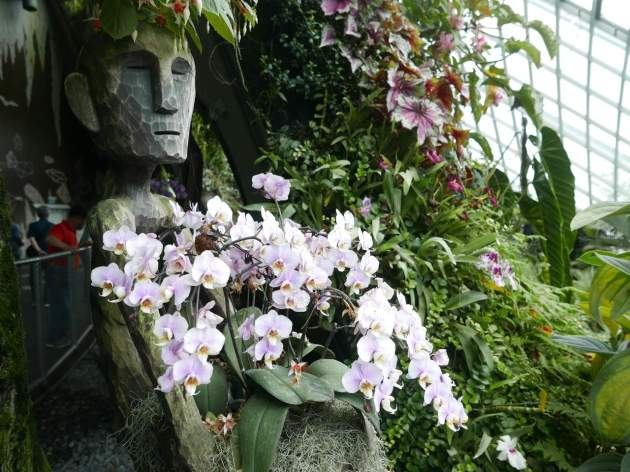 gardens orchids