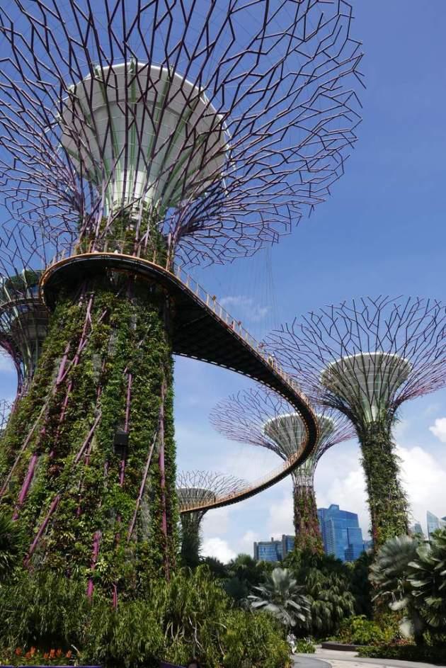 gardens supertrees walkway