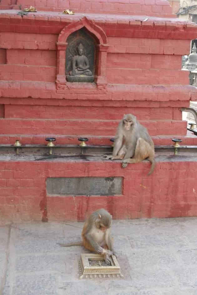 sb monkey altar