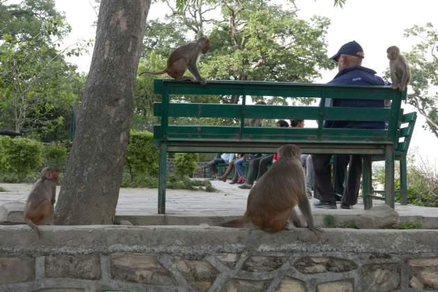 sb monkeys man